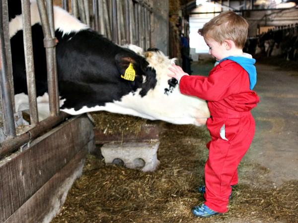 Je eigen koe om te verzorgen en mee te knuffelen...