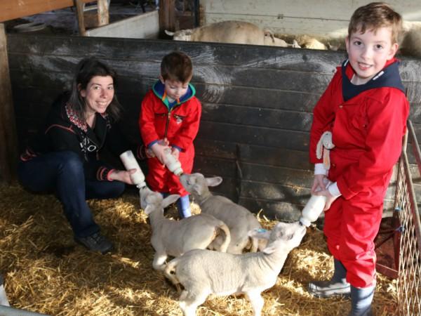 Lammetjes melk geven bij de Schaapskooi Kasterlee