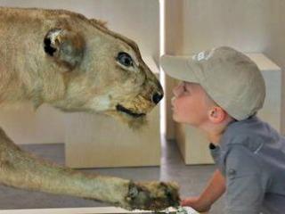 Leeuw in museum Natura Dorcet Wonderryck Twente