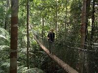 Over een touwbrug in de Maleise jungle