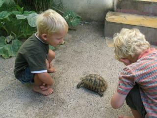 De jongens vinden de schildpadden bij het hotel erg interessant