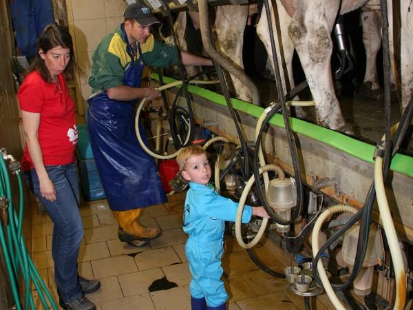 Helpen met koeien melken