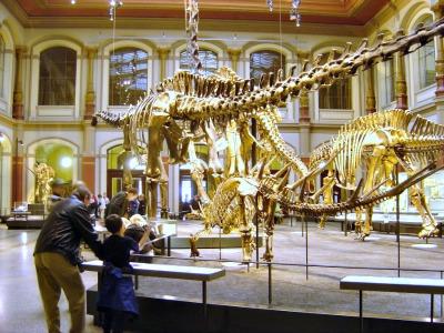 Dino skeletten in het Natuur Historisch Museum
