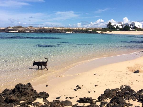 Het strand van Fuertaventura is altijd dichtbij