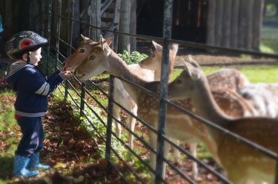Wie is er nou nieuwsgieriger? - Curious deer meet curious Niek;-)