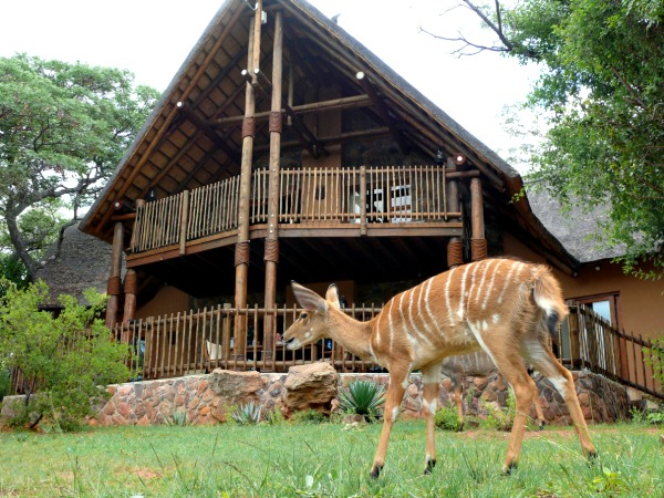 Een Nyala op het terrein van Kololo