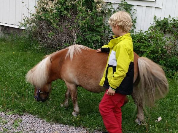 Kindvriendelijke paardjes in de tuin bij het vakantiehuis
