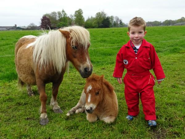 Lieve pony's om te knuffelen en mee te wandelen