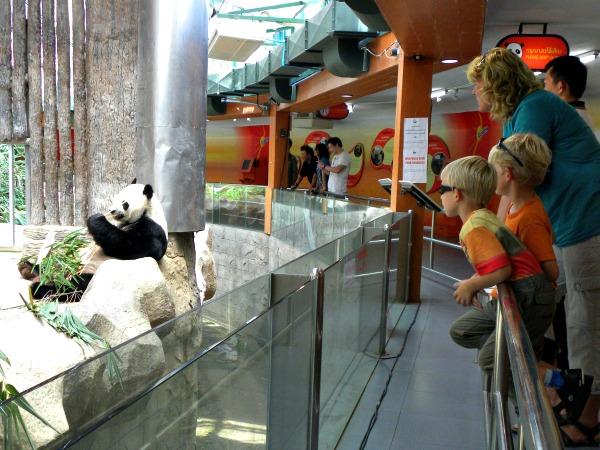 Bij de Panda's in de dierentuin van Chiang Mai