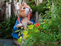 Peter konijn in Beatrix Potter World