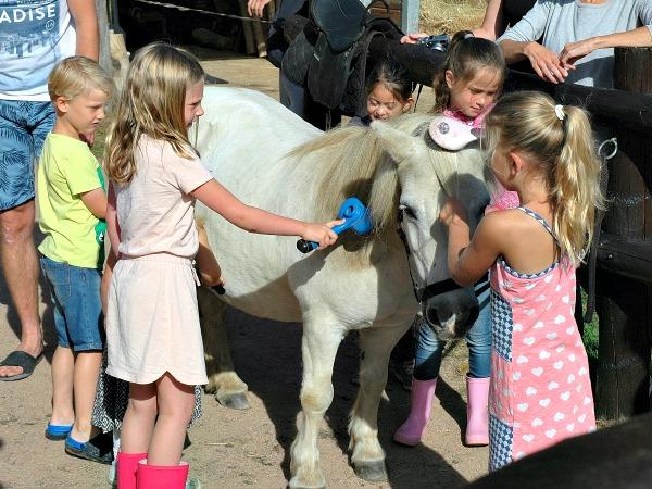 De kinderen borstelen pony Puck