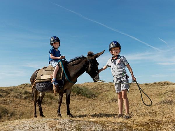 Wandelen met een ezel op Terschelling!