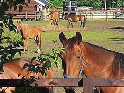 paarden Camping de Reeënwissel