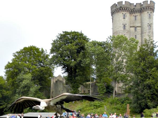 Roofvogelshow bij een kasteel in de Eifel