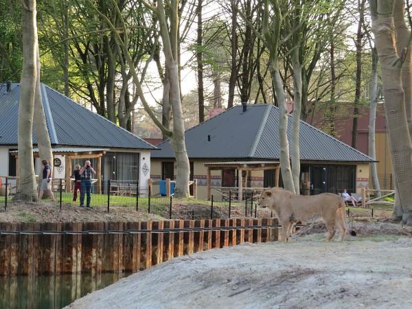 Lodge bij de leeuwenvlakte Safari Resort Beekse Bergen