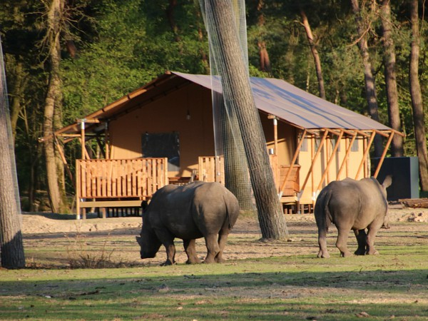 Safaritent op Safari Resort Beekse Bergen