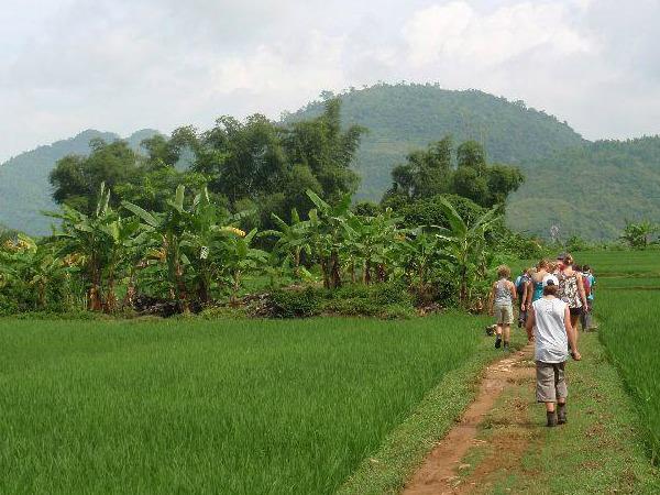 Wandelen door de rijstvelden