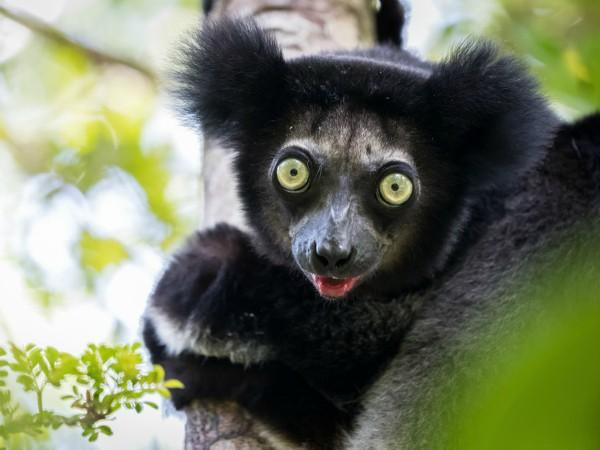 Je gaat veel lemuren zien op de familiereis van Sawadee