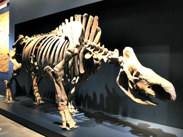 Skelet in het Ruhrmuseum bij Zeche Zollverein
