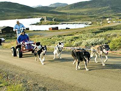 Supergaaf: een sledetocht met honden