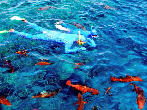 Prachtige vissen spotten bij het Great Barrier Reef