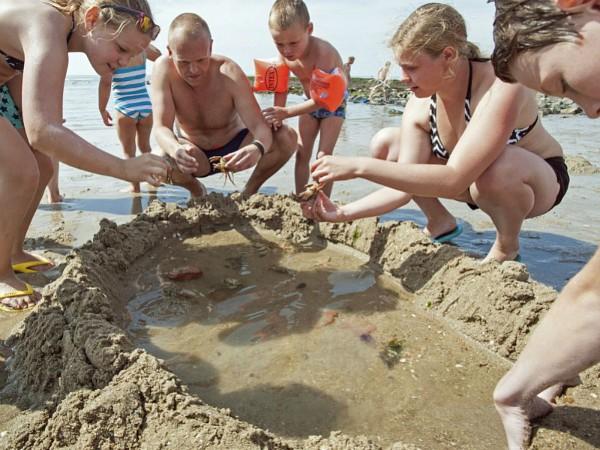 zeedieren vangen en bekijken op het strand