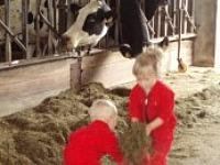 Helpen de koeien te voeren