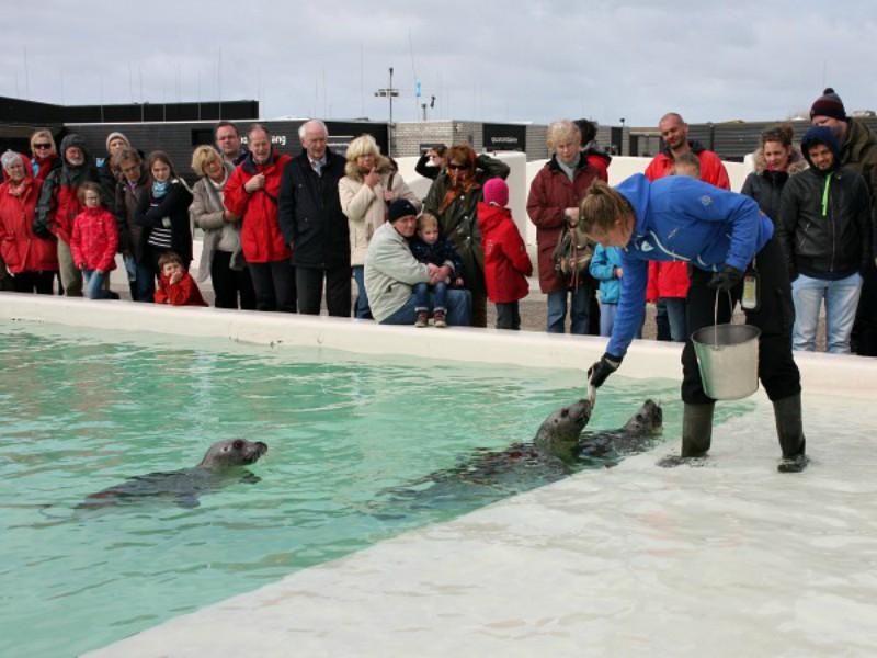 Zeehonden krijgen iets lekkers