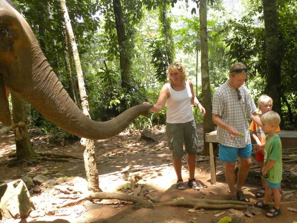 olifanten verzorgen in Thailand