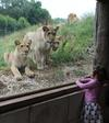Mooi zicht op de panters en leeuwen!
