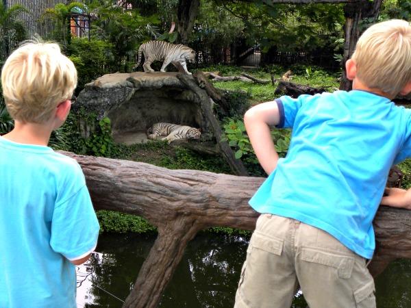 Bij de tijgers in Dusit Zoo