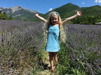 Kenmerkend voor de Provence: de velden vol Lavendel