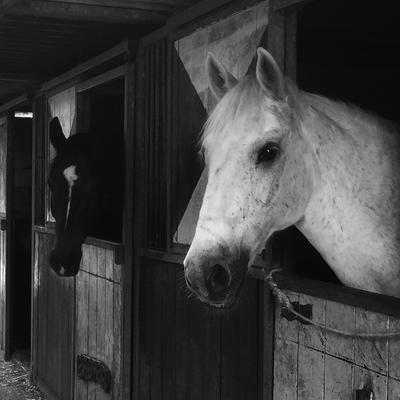 Paarden in stal in een oud dorpje
