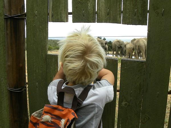 Tycho bekijkt de olifanten in Addo National Park