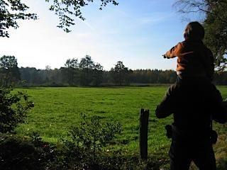 De Veluwe met af en toe een grasveld tussen de bossen