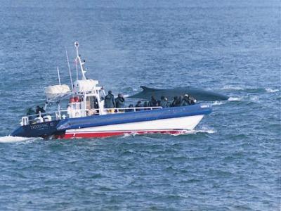 Boottocht om walvissen te spotten