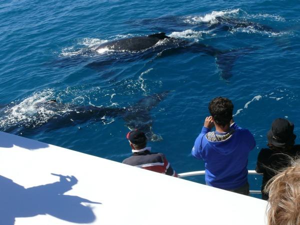 Walvissen spotten vanaf Hervey Bay