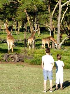 Wandelen tussen giraffe