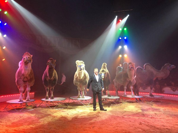 De kamelentemmer heeft een leuke show