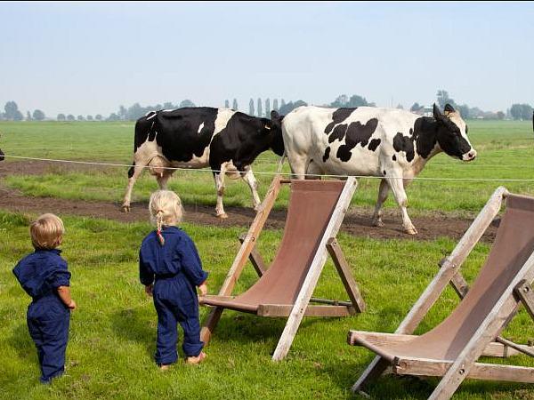 Logeren bij boer, basic of luxe tussen de dieren