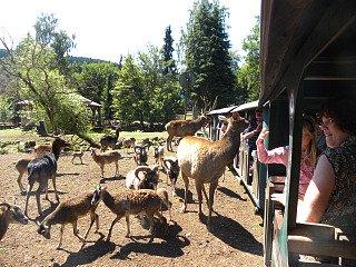 Dieren voeren vanuit het treintje in Eifel zoo