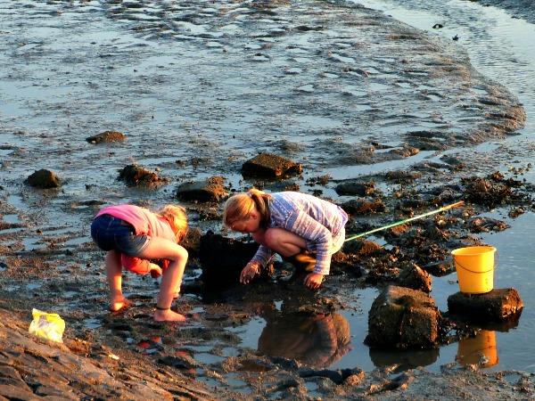 Krabbetjes vangen op het wad bij Schiermonnikoog