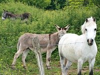 Pony's bij La Bonne Vie