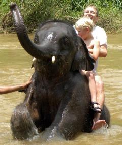Olifantje wassen in Thailand