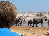 Olifanten kijken