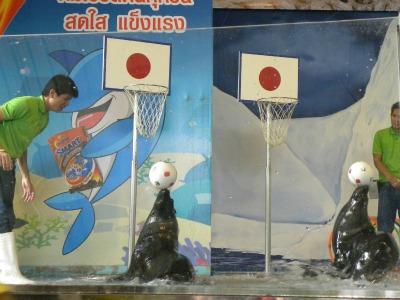 Zeeleeuwenshow in Dusit Zoo, Bangkok