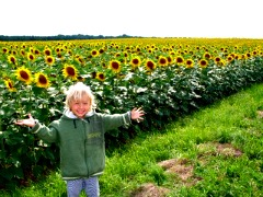 Zonnebloemveld in Frankrijk