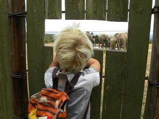 Tycho kijkt naar de olifanten vanuit een schuilhut