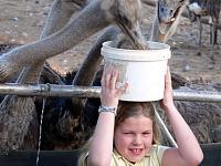Struisvogels voeren in Zuid-Afrika