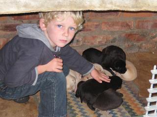 Zeb bij de jonge hondjes